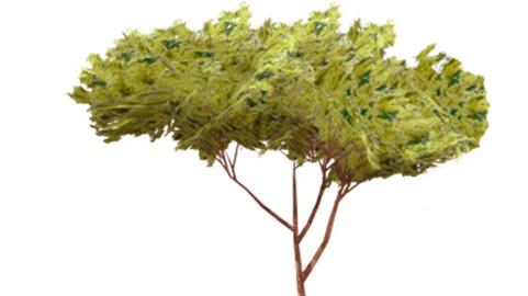 Resource-Plant Pin Pinion 1