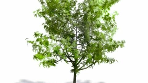 Resource-Plant Generic Tree summer 6