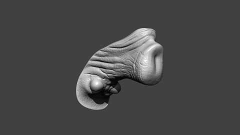 Rhino Genitals Highpoly Sculpt