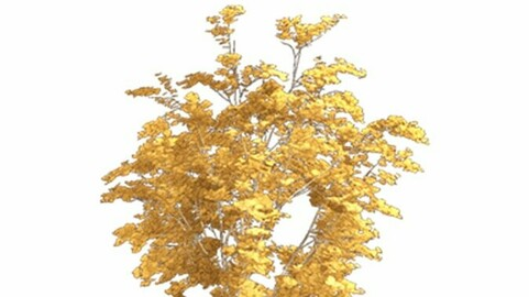 Resource-Plant Japanese oak with chestnut leaves