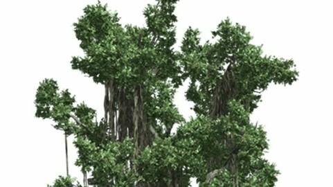 Resource-Plant Banyan