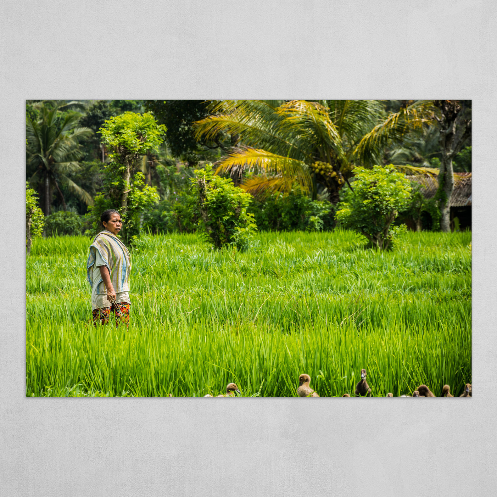 Let's hide in the rice fields