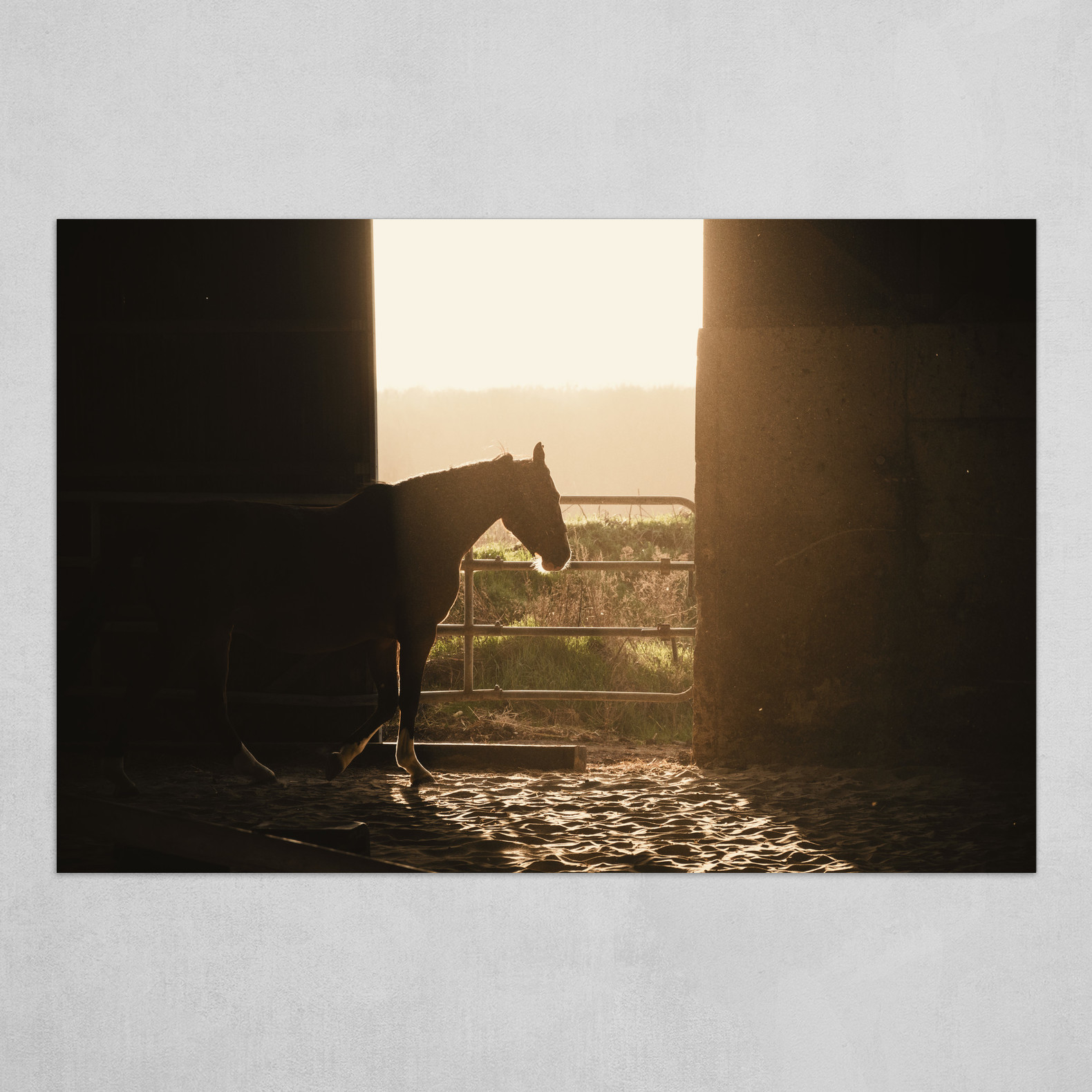 Lonesome Horse