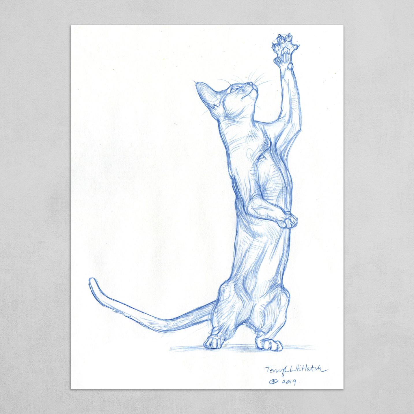 Cat reaching