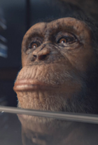 Chimpanzee dsgn screens 001e